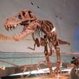 05 恐竜博物館
