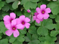 武蔵野公園の花